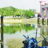 Kemarau Panjang, Air Cisadane Surut, Produksi Air Terganggu