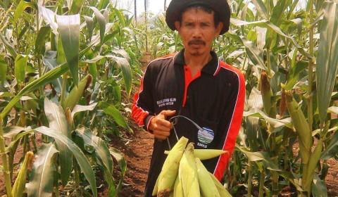 Pemkab Tangerang Proyeksi Pangan Aman Sampai Oktober 2020